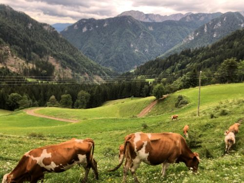 Słowenia Solcava Panoramico
