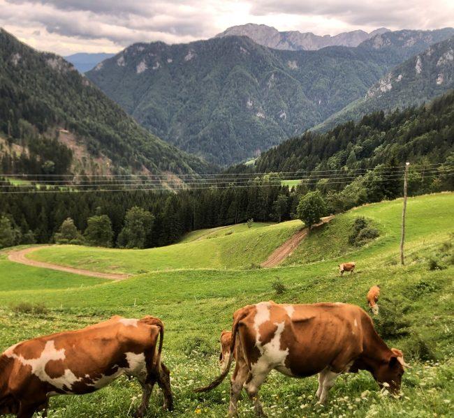 Droga widokowa Słowenia